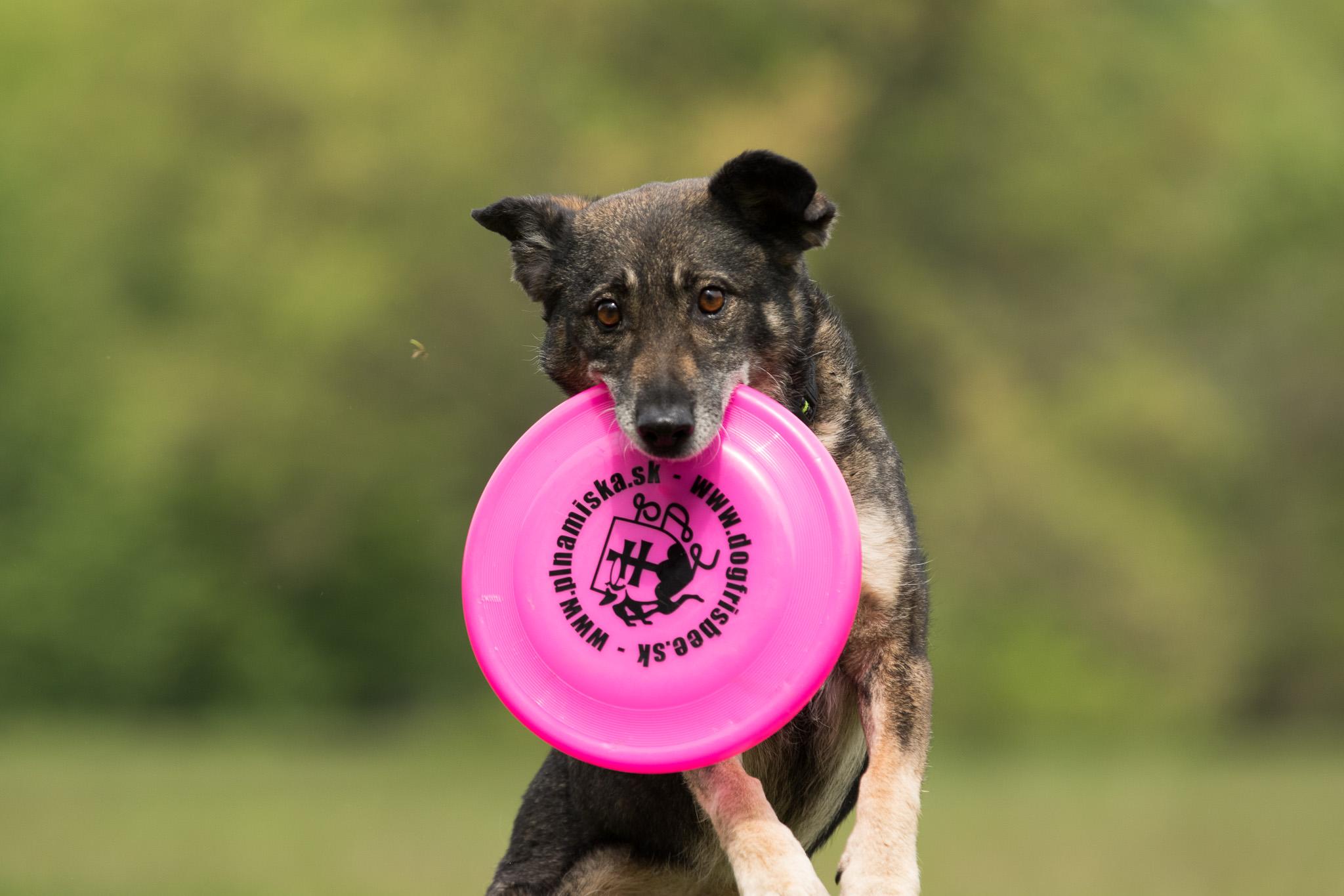 Dogfrisbee – Trnava Frisbee Games
